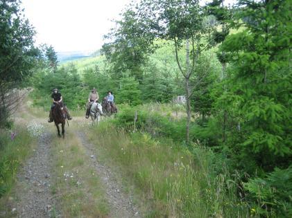 Horsey #1